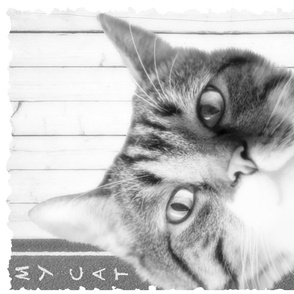 "My Cat ""Attude"" Portrait Tea Towel Grey Scale"
