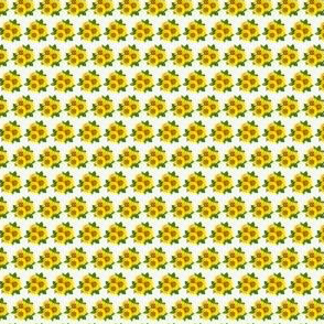 Micro sunflowers clusters
