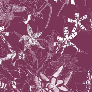 Orchidarium II White on Merlot 150