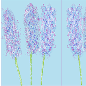 Happy Hyacinth