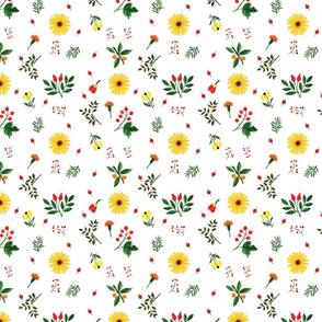Daisy _ Berries