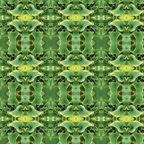 Hosta Kaleidoscope