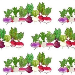 A Turnip Lineup  White