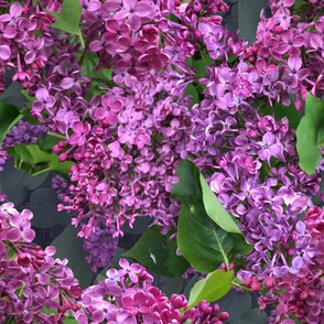 Among The Lilacs - Zigzag