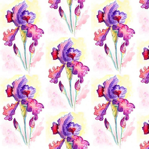 WCPencil Iris