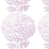 chrysanthemum stripe