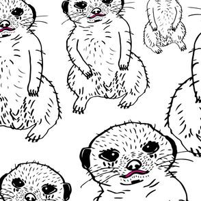 meercat cutie