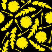 Dandelions with black background