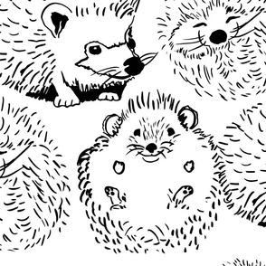 hedge hogs
