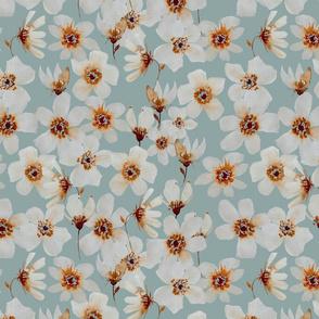 Cupreous lihtblue
