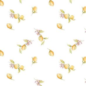 White Minimal Watercolor Lemon Blossoms -032