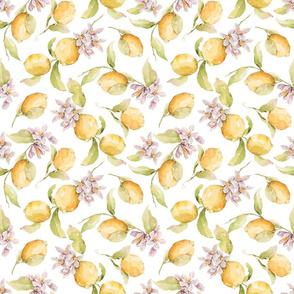 White Watercolor Lemon Blossoms -032