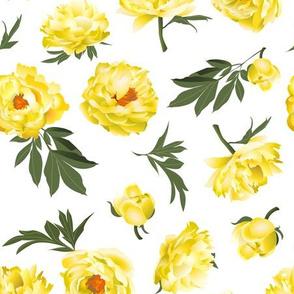 yellow peonies on white