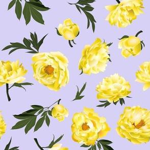 yellow peonies on lilac