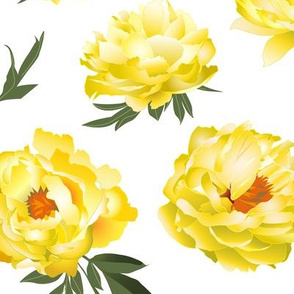 yellow peonies on white - large scale