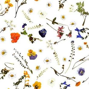 pressed garden flowers