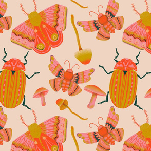 Moths &Beetles
