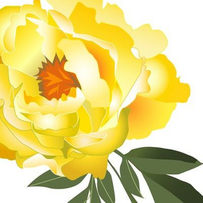 yellow peonies - extra large scale