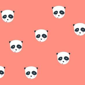 Panda bear in coral