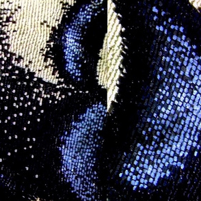 Close-up Butterfly Wing Scales