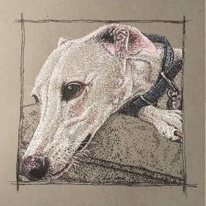 Greyhound/Whippet White on grey(2)