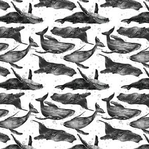 Whale Pod