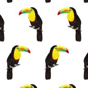 "Minimalist Toucans 5"""