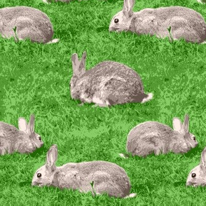 08869497 : © rabbit rabbit rabbit