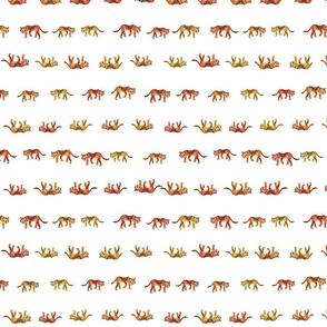 tiger rows