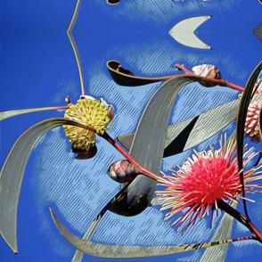 Australian Pincushion Hakea #3 mirror