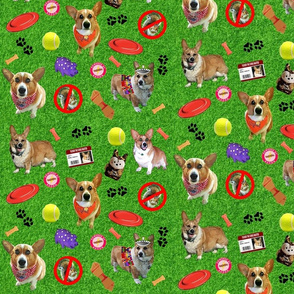 Tucker dog park_small