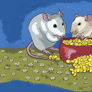 Fancy pet rats munching on corn