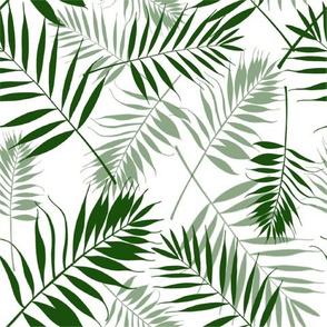 Parlor Palm White