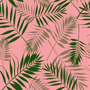 Parlor Palm Pink