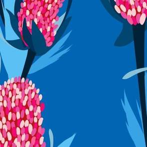 Pink Banksia in Blue Background