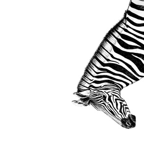Zebra teatowel Black & White