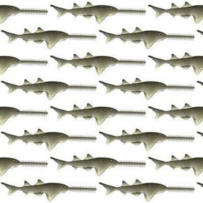 Sawfish sawshark