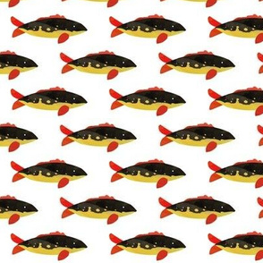 Black, Red + Gold Fish