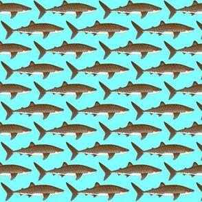 Whale Shark on blue