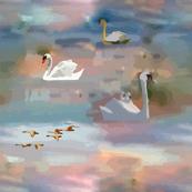swan lake in sunset