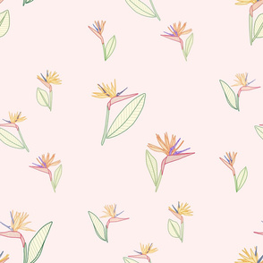 Bird Of Paradise Soft Pink