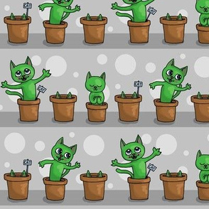 Growing cat plants -grey