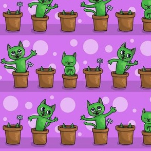 Growing cat plants -purple