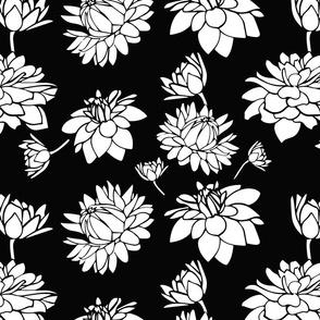 Blooming Dahlia (bw)