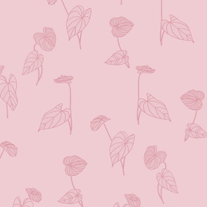 Anthurium Dusty Pink