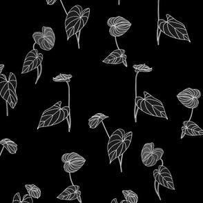 Anthurium White on Black