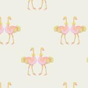 ochid ozzie ostrich