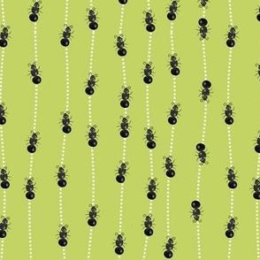 Marching Ants (kiwi)