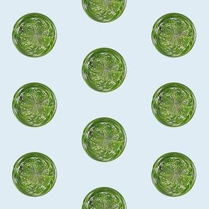 amazing fern 5 inches tif -
