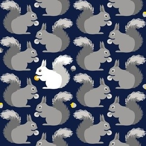 Squirrels (on navy)
